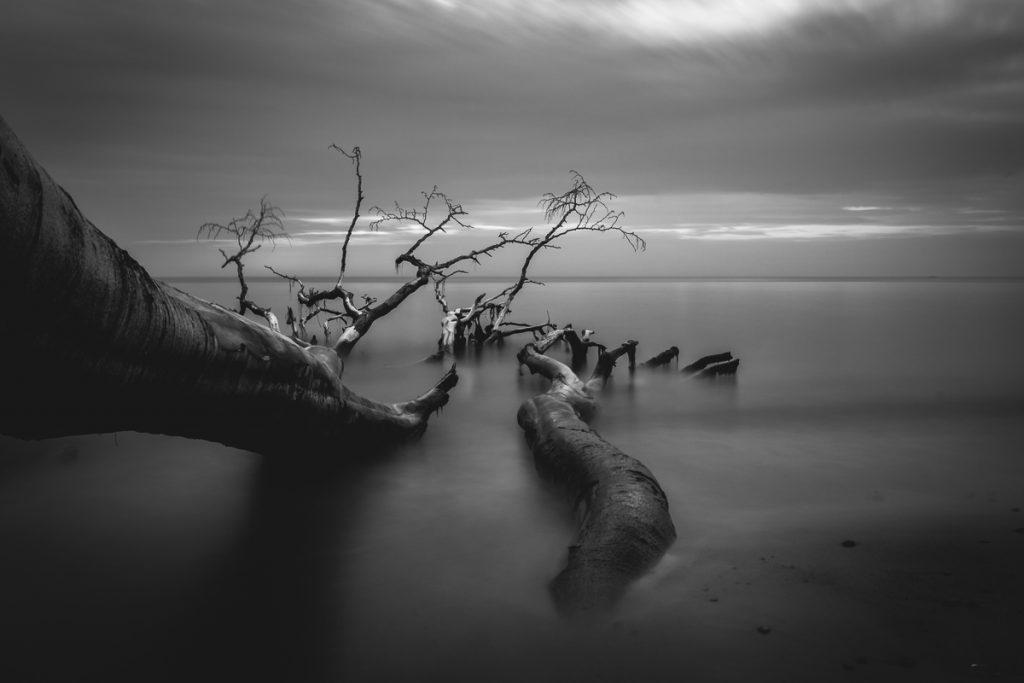 Ostsee - Darß
