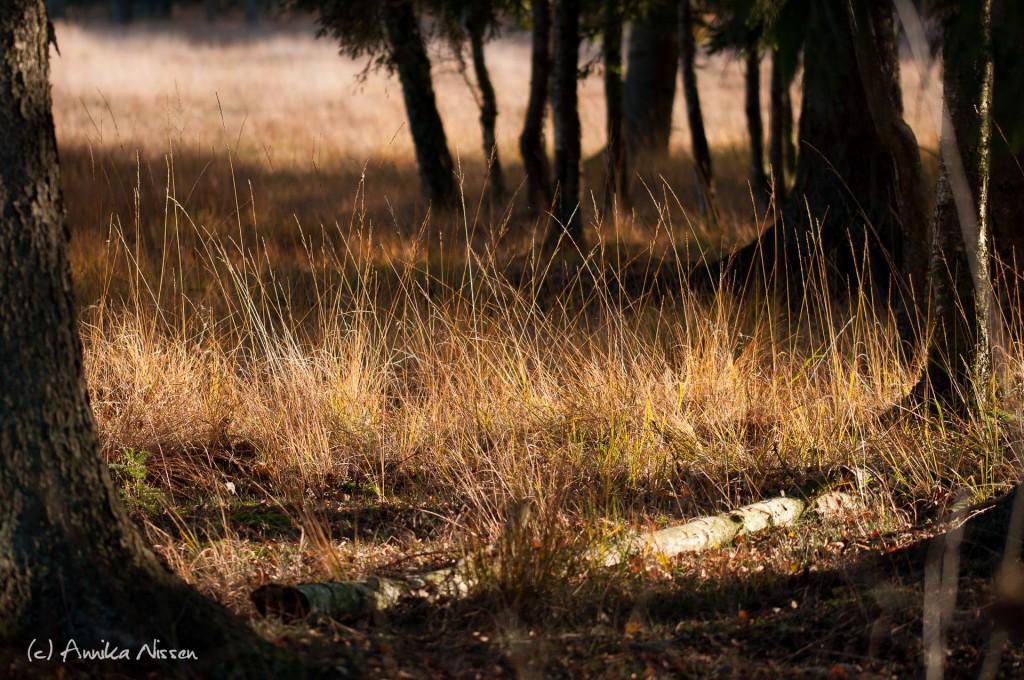 Mein Foto des Jahres entstand im November im Duvenstedter Brook. Gerade jetzt wo es so kalt ist, erinnert es mich an den wunderschönen Spätsommer von diesem Jahr und die vielen tollen Fotos die ich von dort mitgebracht habe - Annika Nissen