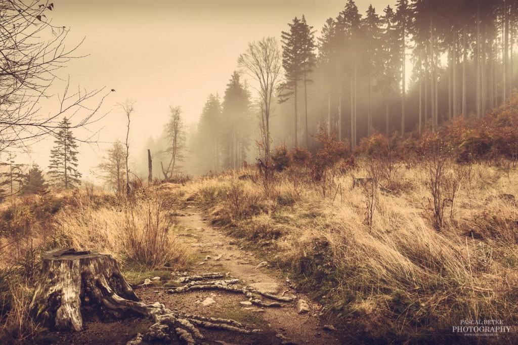 Ilsetal im Harz - Pascal Betke