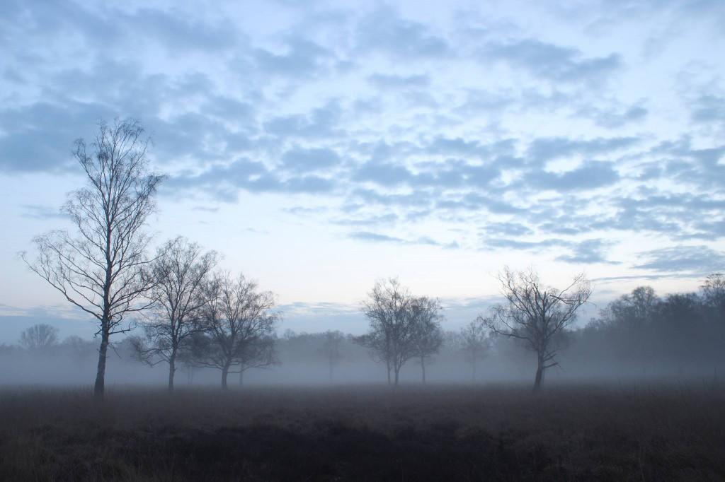 Mein Foto 2014, Morgens bei Eiseskälte mein Bild es Jahres gemacht, der Duvenstedter Brook im Morgennebel - Jakob Ot