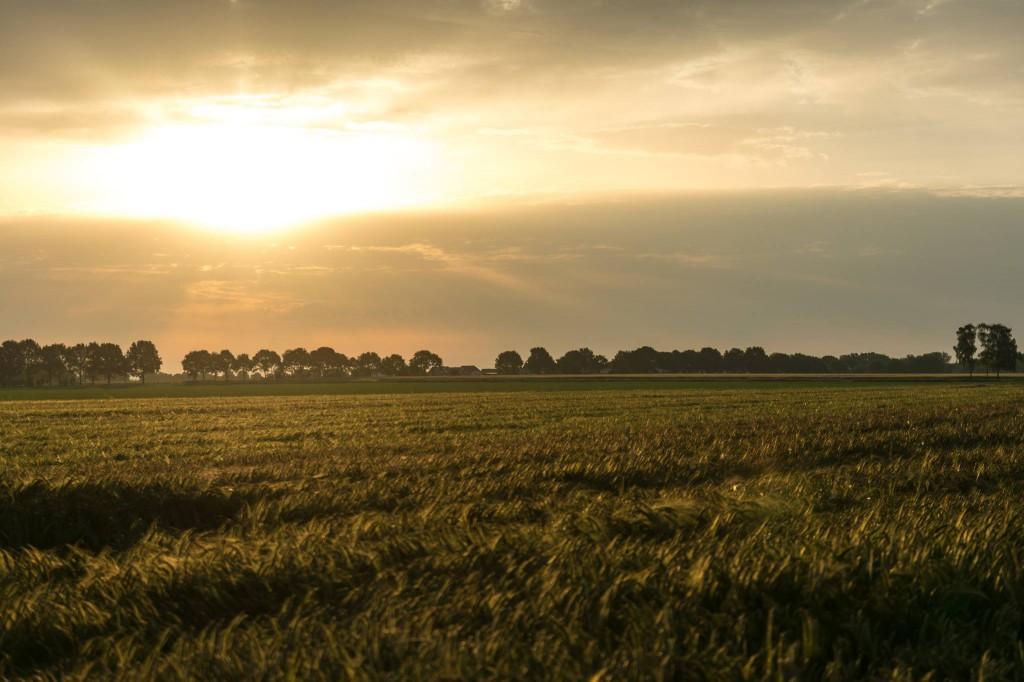 Das schönste Foto 2014 ist eine sehr schwere Wahl. Daher ein Foto nach dem schönsten Open-Air-Festival des Jahres. Den Sonnenaufgang über den Feldern um kurz vor 6 Uhr Morgens - Felix Vietor