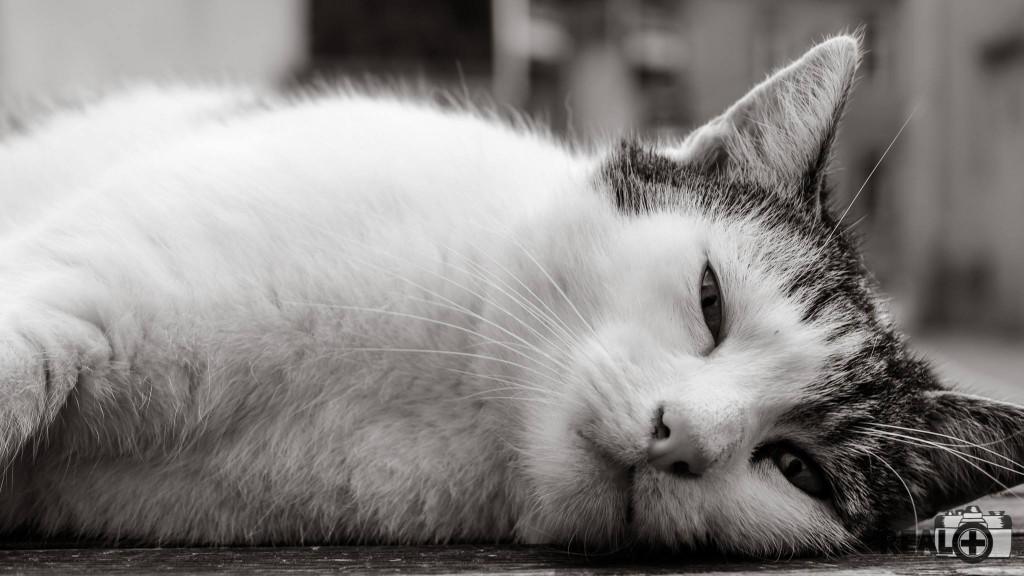 Aufgenommen auf Heimatbesuch im September. Meine Kamera war schon fast in der Tasche als diese fremde Katze an mir vorbei schlich - Felix Kahnbach