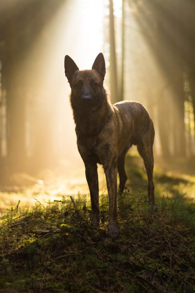Mein Foto des Jahres. Licht im Wald ist immer magisch.. Und dieses hier gefällt mir ganz besonders.. mein Bambi (wer auf dem letzten Stammtisch war kennt ihn nun ja auch) - Patrizia Korppi