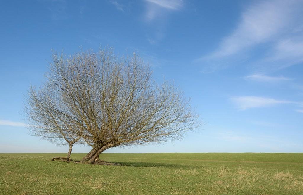 Meine Wahl viel auf dieses Bild, weil es mich daran erinnert, daß nach dem Winter auch wieder ein neuer Frühling kommt - Bernd Malöwsky