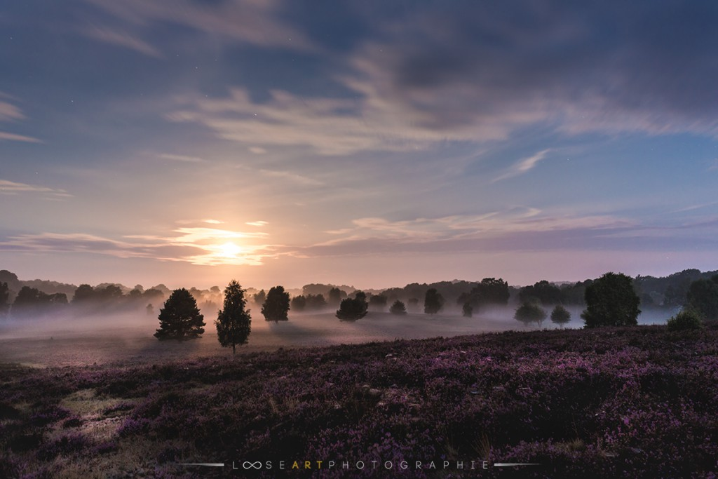 Lüneburger Heide Nebel